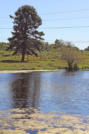Russell Orchards Pond